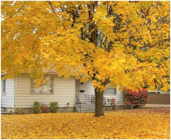 Autumn Neighbor