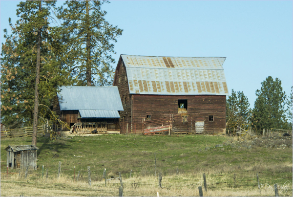 Barn and Sheds