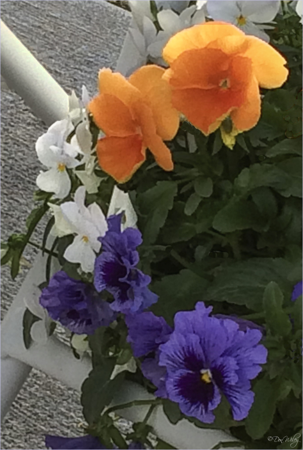 Three colored flowers