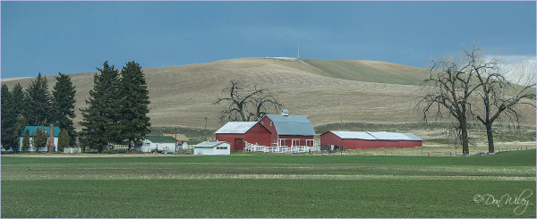 A Palouse Farm