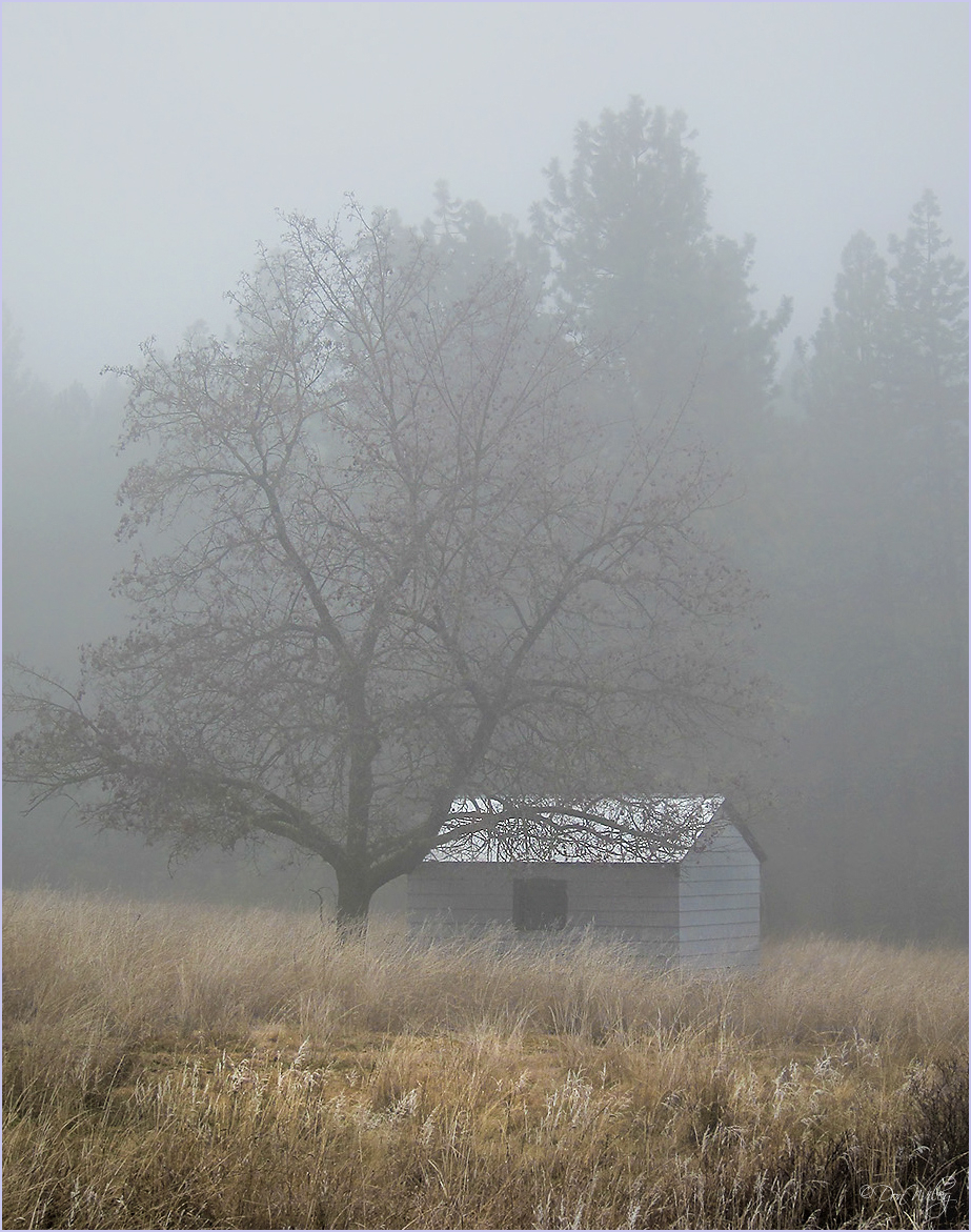 Fogged Shed