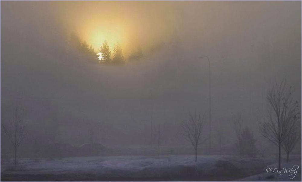 Sunrise Thru Foggy Trees