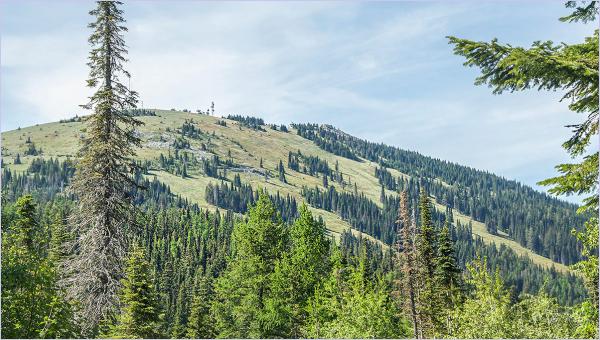 Top Of Mt. Spokane