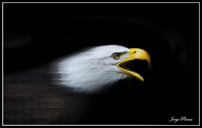 Eagle Atack