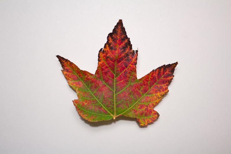 Burning Leaf