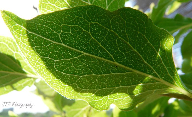 Just a leaf