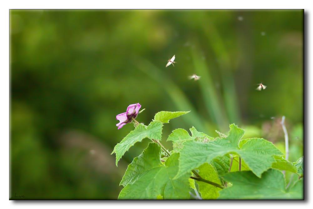 Fleur et Insectes