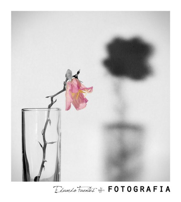 "Serie ""Irrealidades"" #15"