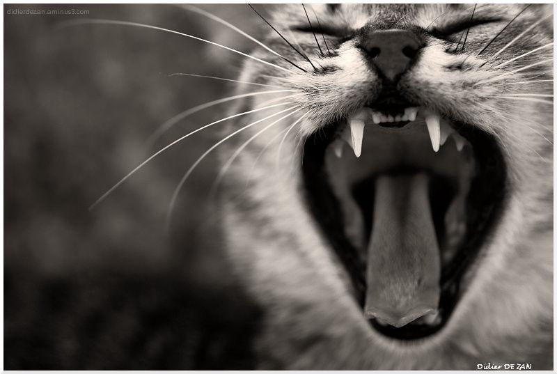 Miaou...