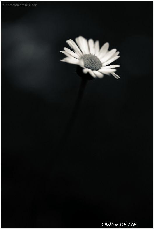 A flower !!!