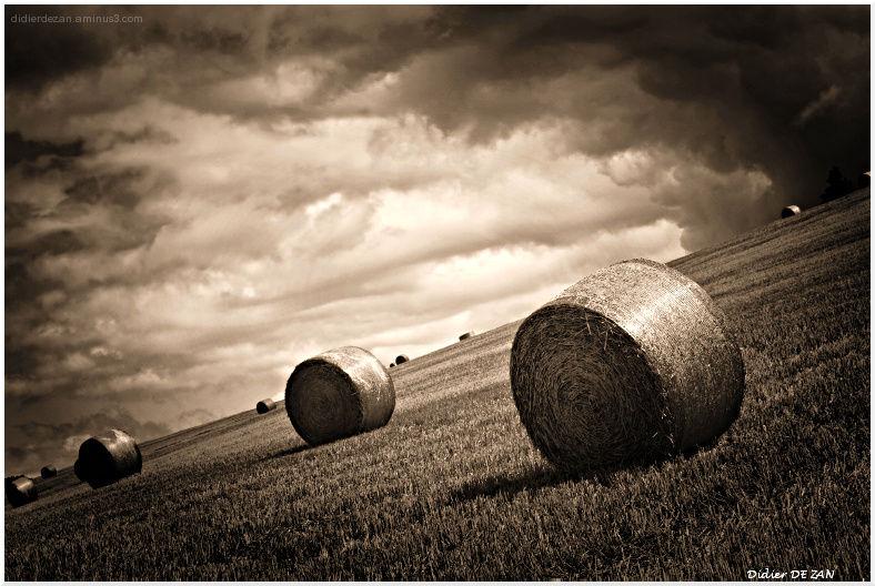 Dans les champs ....