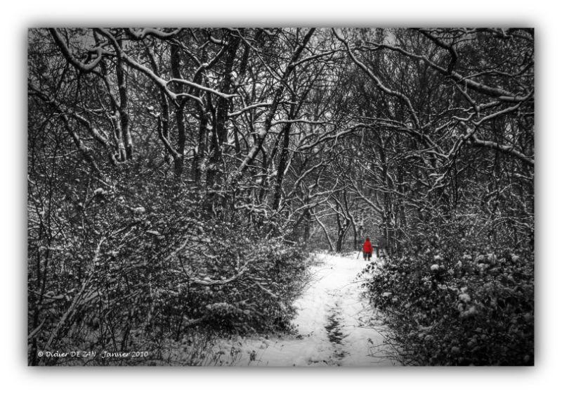 Promenons nous dans les bois ....