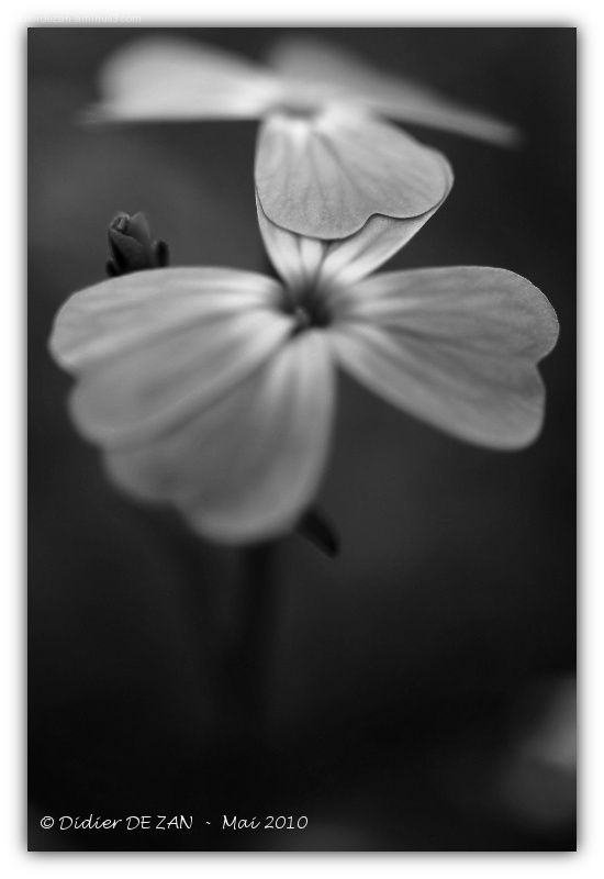 A Flower ....