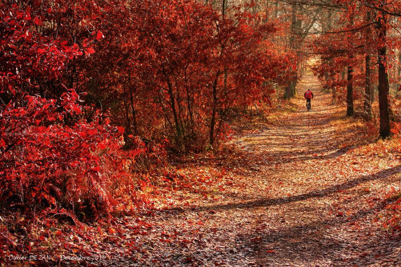 Promenade Hivernale ....