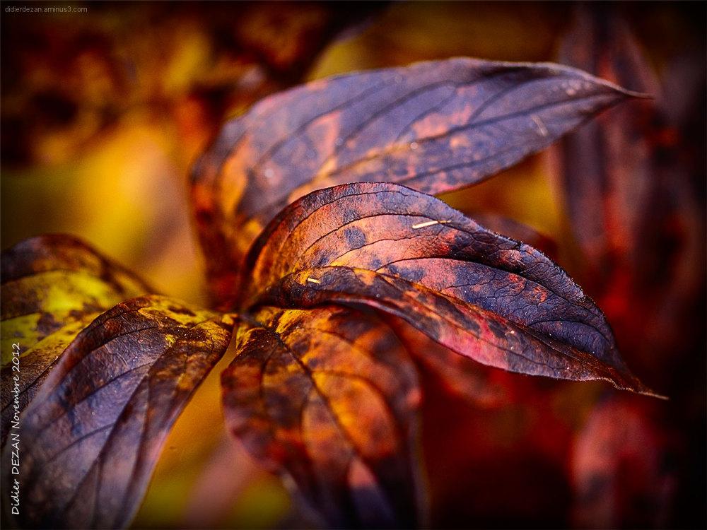 Fall colors ....