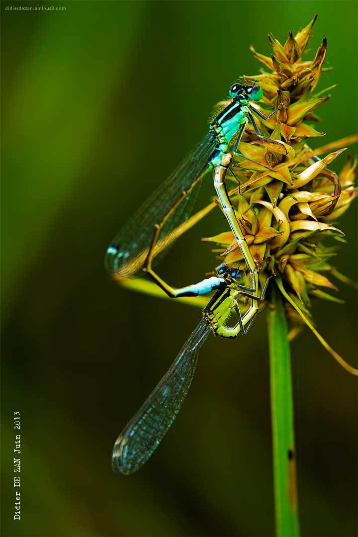 Dragonfly....
