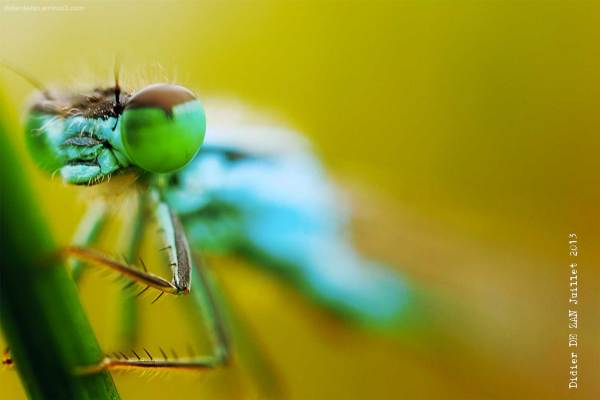 Dragonfly ....