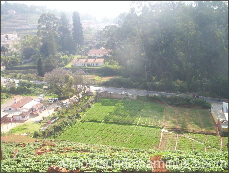 Terrace farming plant nature photos imaging oblivion for Terrace farming in india