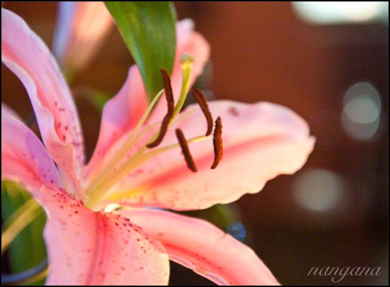 flutter of pink