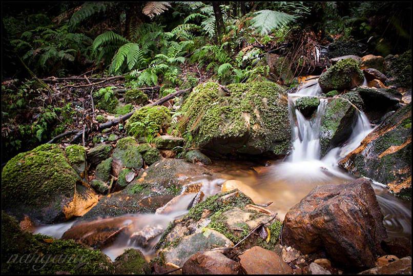 rocks moss water