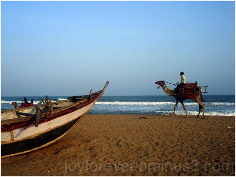 Camel on sea beach in Puri Orissa India