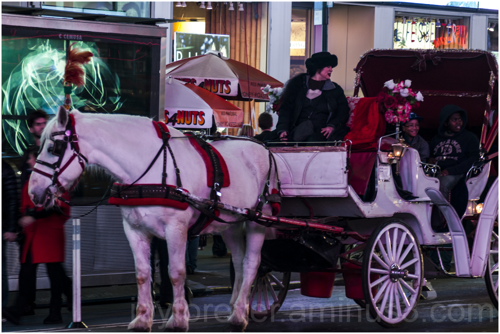 horse carriage times-square new-york NYC