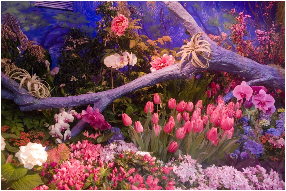 Macy's Flower-show Manhattan New-York store Color