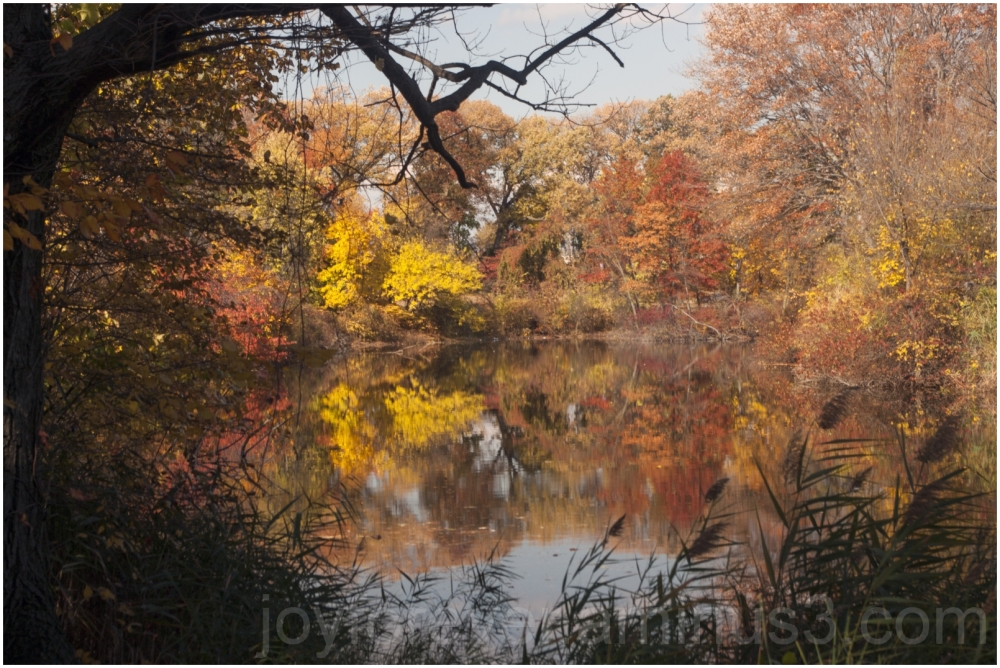 fall foliage leaves red yellow reflection Newark