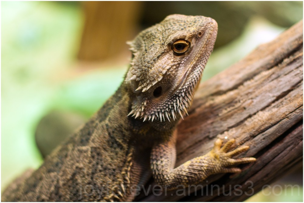 lizard aquarium animal reptile Baltimore