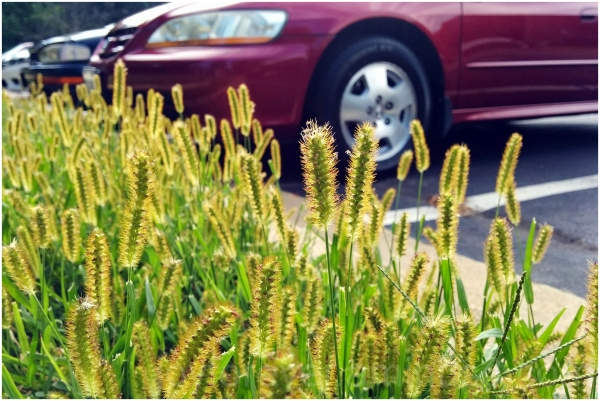 grass plant flower macro car weed