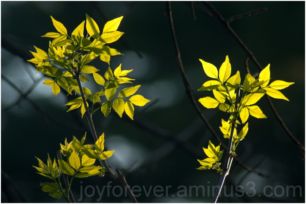 spring leaves plant green yellow sunlight