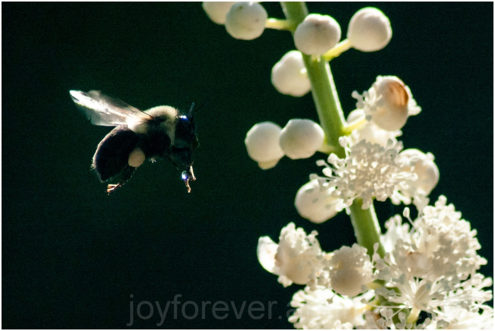 bee insect flower fly hover insect plant