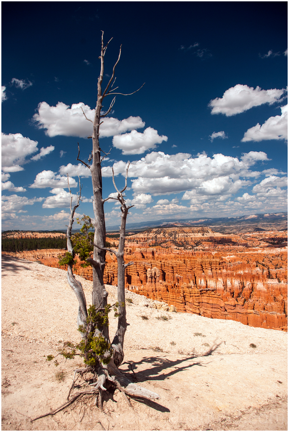 tree bryce canyon rocks sky clouds hoodoos Utah