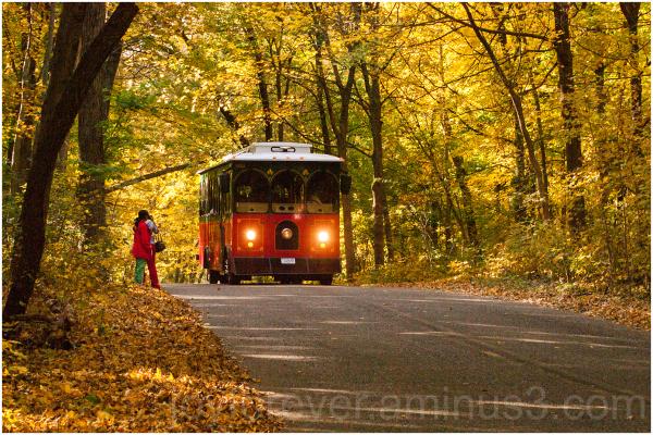 fall foliage arboretum Madison bus trolley yellow