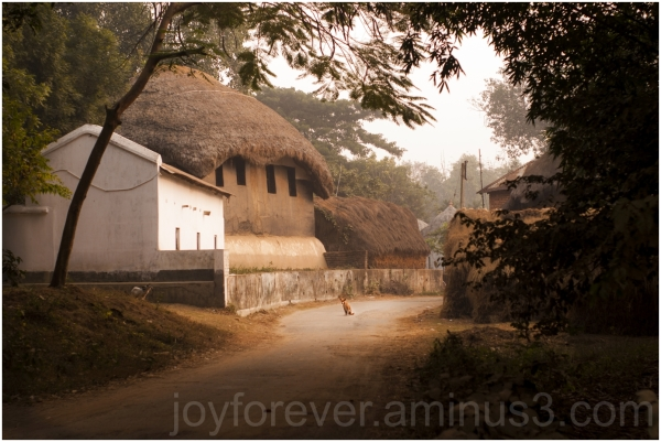 village road huts houses dog Bengal India morning