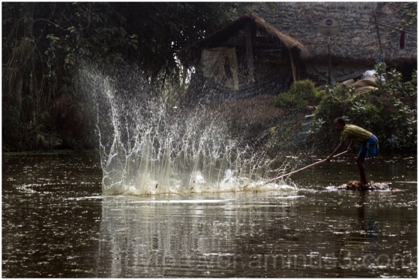 fishing net pond water splash fish village india