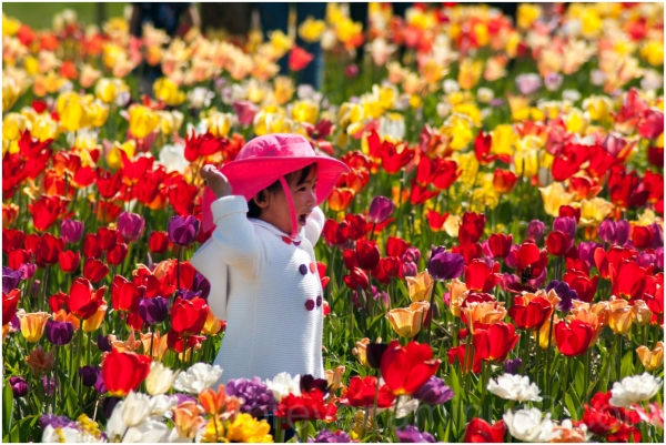 flowers tulip colour holi child girl color