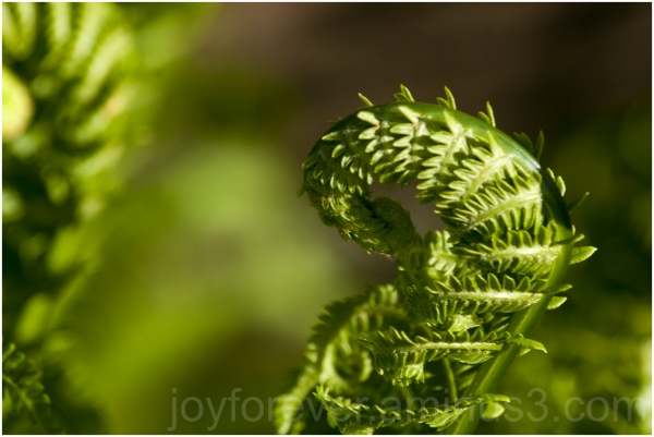 fern frond leaf green spring plant