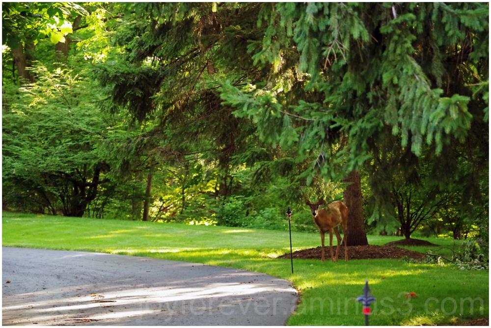 deer trees LakeForest wildlife