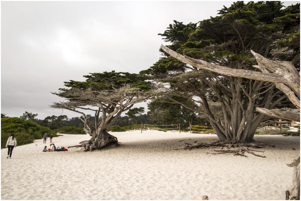 Pacific ocean beach sand trees Carmel sea