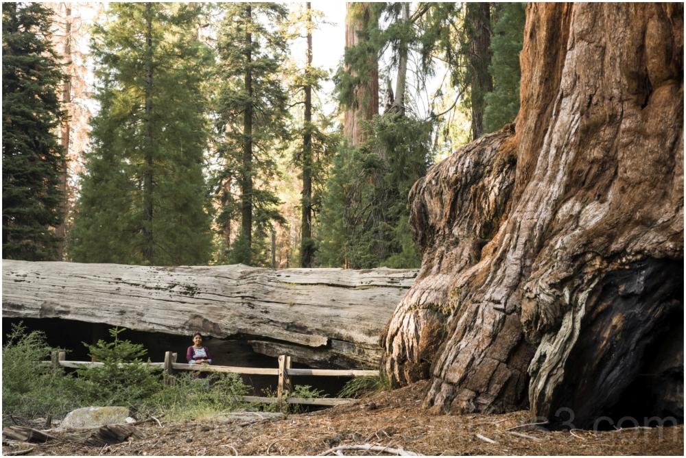 Giant Sequoia tree trunk stump woman KingsCanyon
