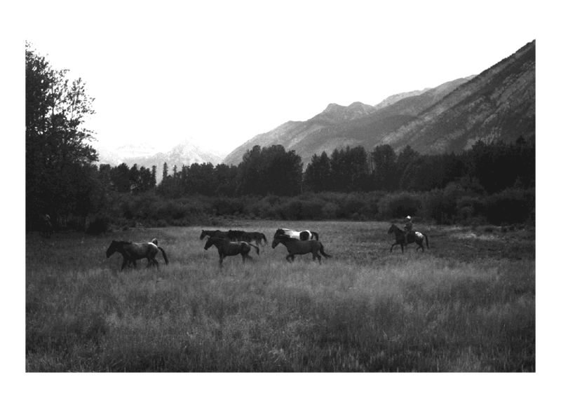 the Banff Ponies