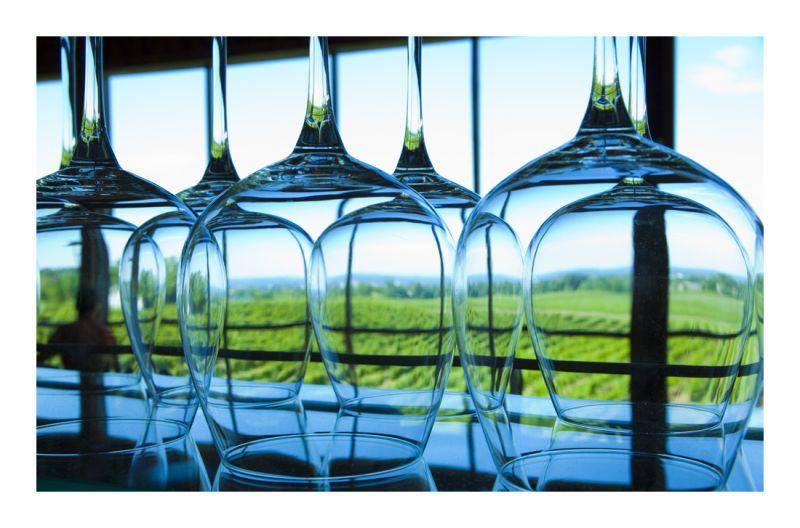 .. vineyard thru glass ..