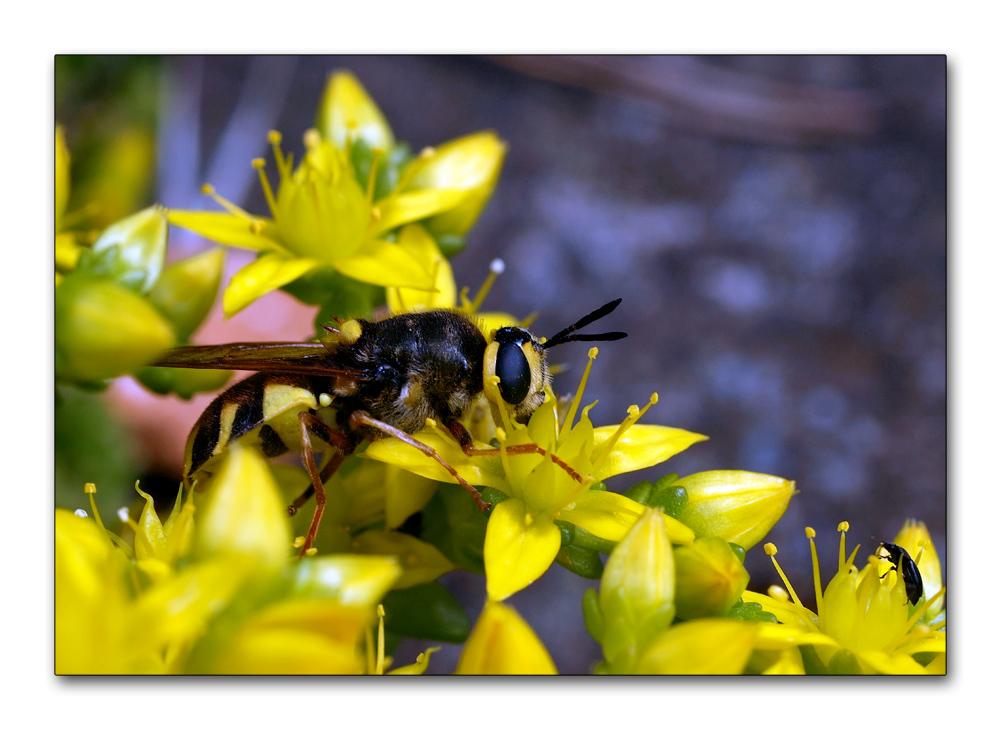 Galerie d'insectes !!!  (5)