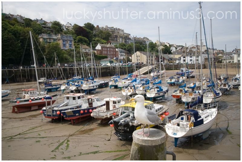 Ilfracombe Harbor at Low Tide