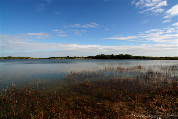 Waters of the Everglades