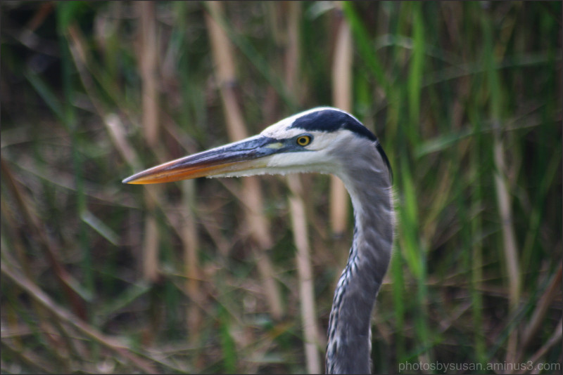 Wildlife in the Glades