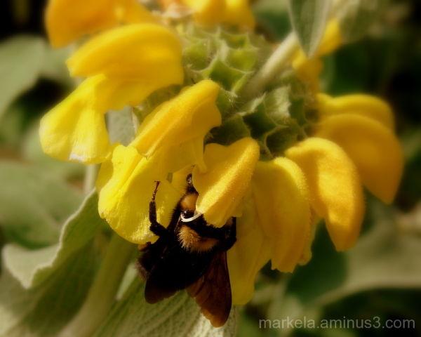 Honey bee mine!!