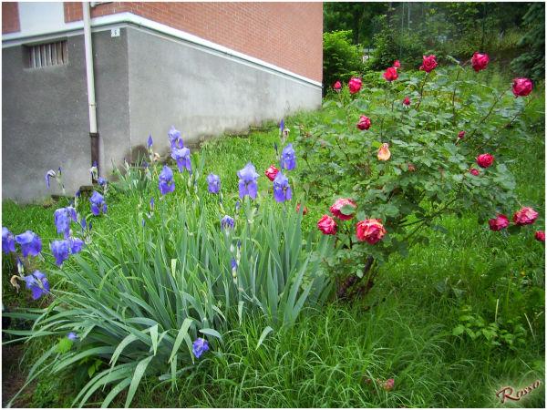 Fiori dopo la pioggia