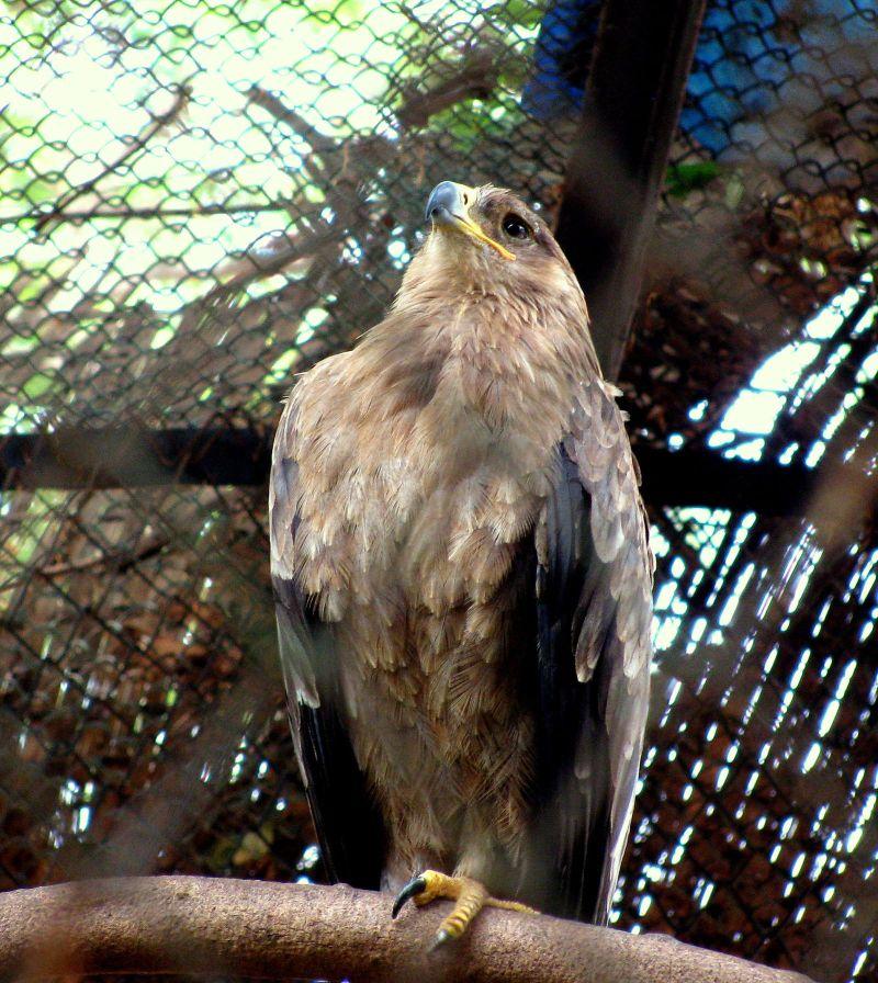 Eagle Eye.....